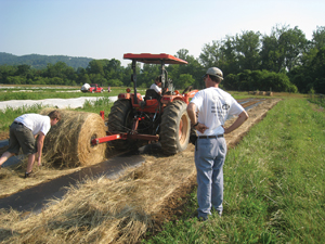 growing plants in hay bales growing plants in hay bales simpler way to use round bales - Growing ...