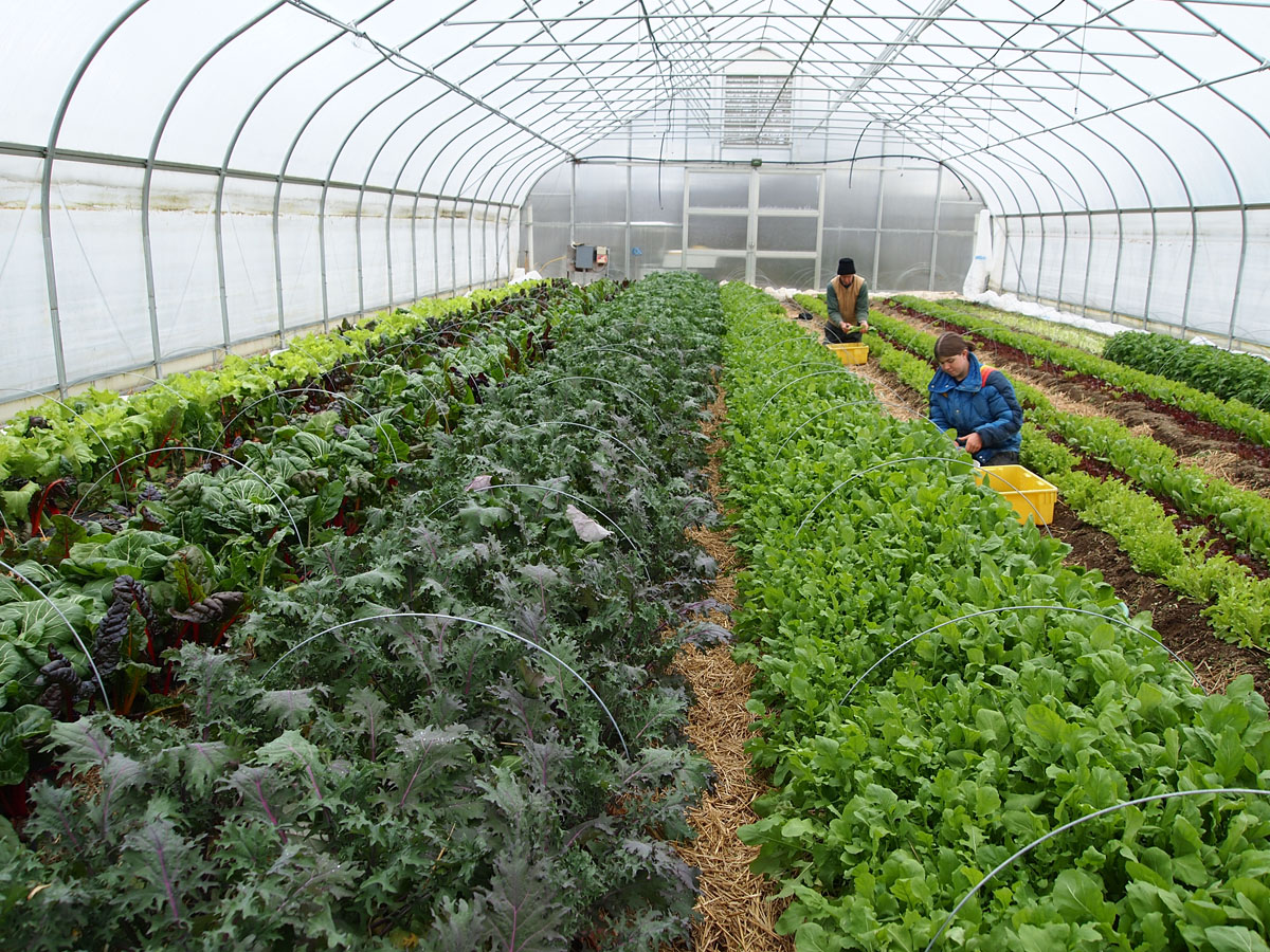 Eight tips for winter success growing for market - Profitable crops small plots ...