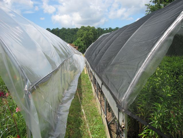 In Hot Climates Around The World, Vegetables And Cut Flowers Are Grown  Under Shade Cloth To Reduce Heat And Light Intensity, Resulting In Better  Quality And ...