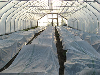hoop house with row covers over plants